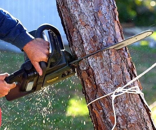 Спил деревьев в Ульяновске и Ульяновской области