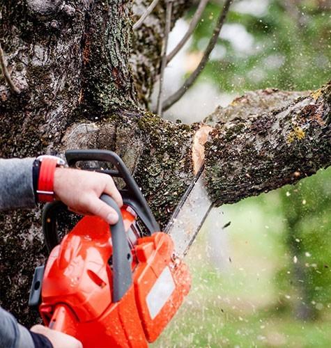 Услуга по спиливанию деревьев в Ульяновске